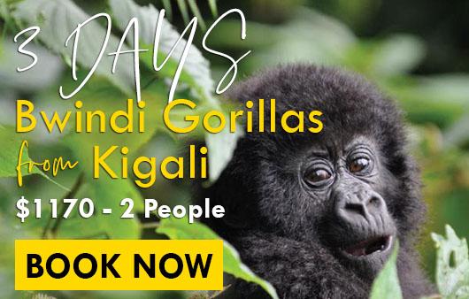budget Uganda safari