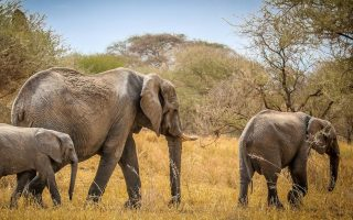 6 Days Tanzania Wildlife safari with a Coffee tour