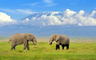 3 Days Lake Nakuru and Amboseli Wildlife safari