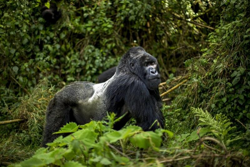 11 days Tanzania, Kenya & Uganda Safari Tour