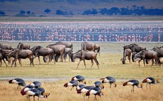 3 days Lake Manyara national park wildlife safari