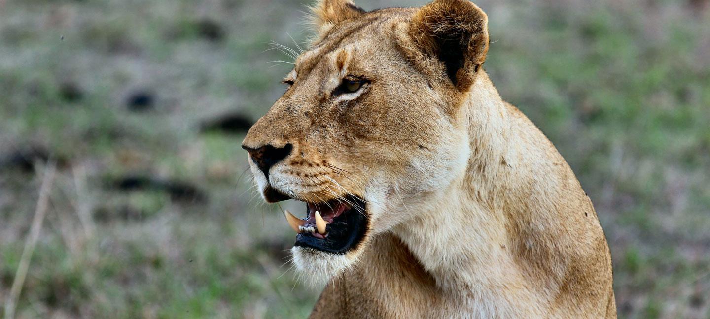 3 days Lake Manyara national park wildlife safari