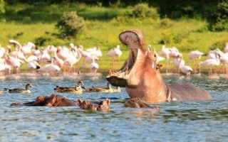 3 days Lake Naivasha and Lake Nakuru wildlife safari