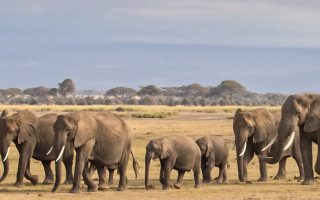 5 days Amboseli & Tarangire wildlife safari