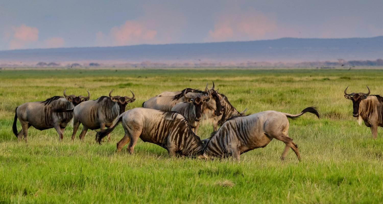 5 days Amboseli & Tarangire wildlife safari