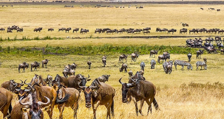 5 days Tanzania Northern Circuit Wildlife Safari