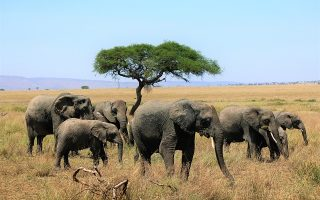 5 days Tanzania Northern Circuit Wildlife Safari