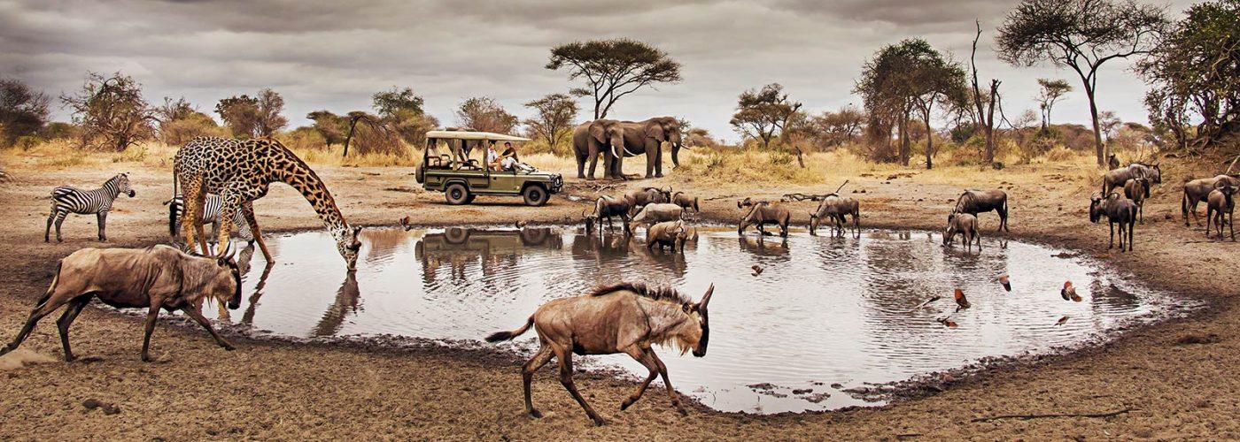 Game Drive Safari in Serengeti national park
