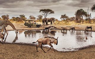 Game Drive Safari in Serengeti national park