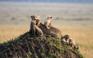8 days Tanzania and Kenya Wildlife safari