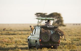 Safari guide for Serengeti national park