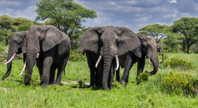 6 Days Tanzania Adventure Safari