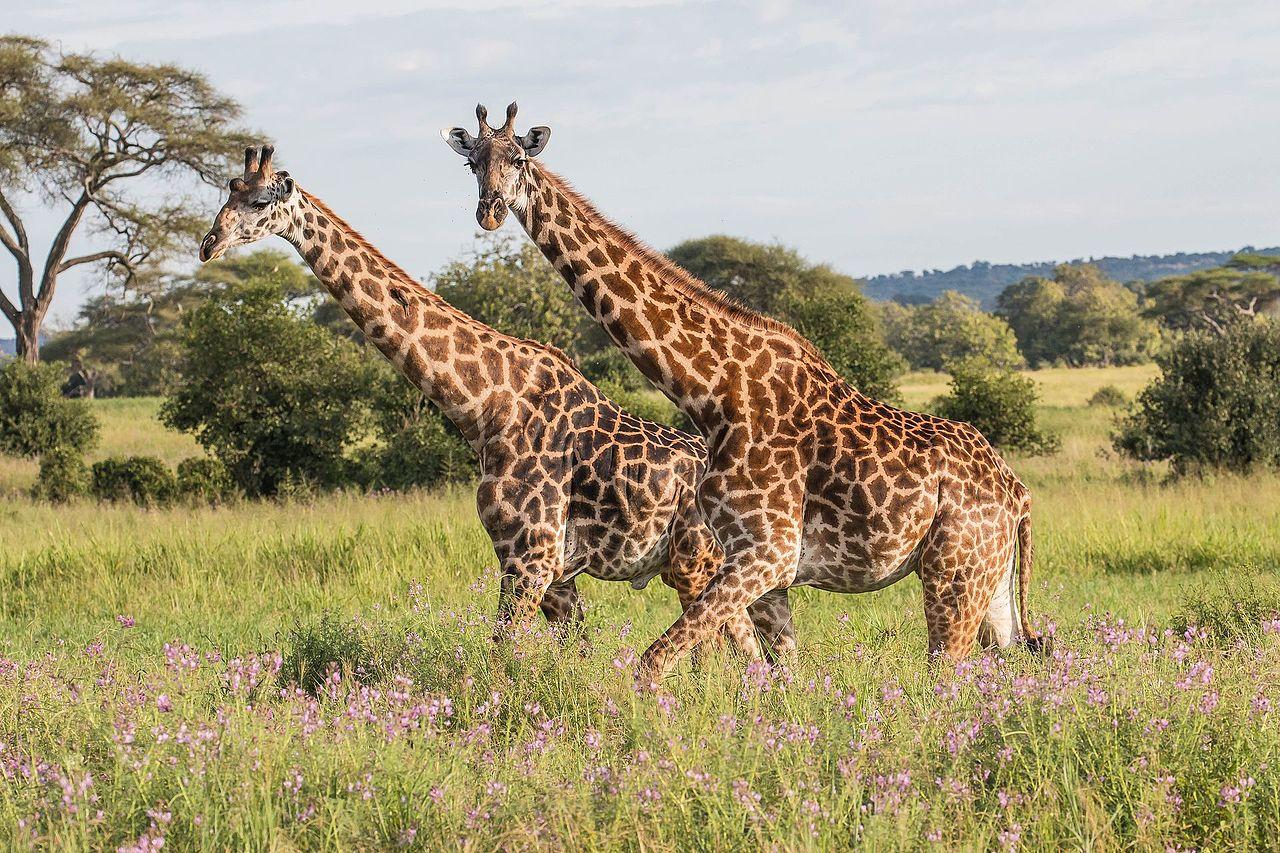 9 Days Best of Tanzania Safari
