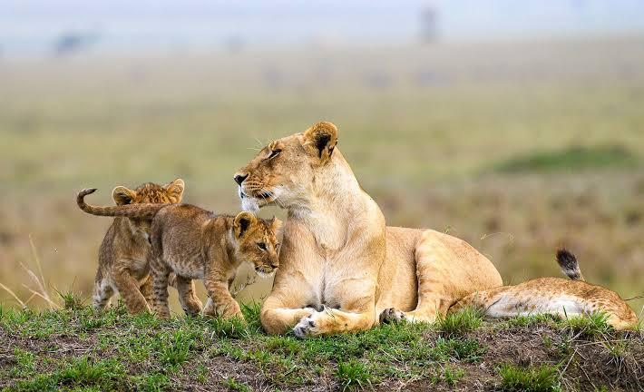 8 days Magic of Kenya safari