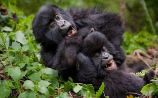 3 days Rwanda gorillas & Golden monkey trekking safari