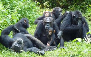 13 Primates in Kibale Forest National Park