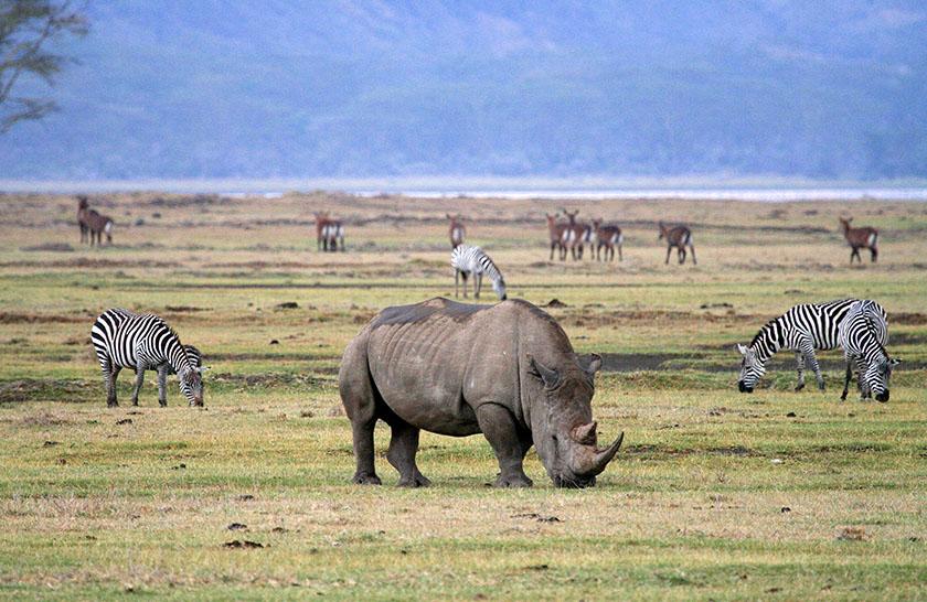 8 Days Serengeti & Ngorongoro Safari