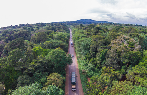 Top things to see & do in Mabira forest reserve