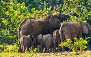 2 Days Murchison falls park wildlife safari