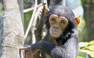 3 Days Chimpanzee trekking in Nyungwe forest national park