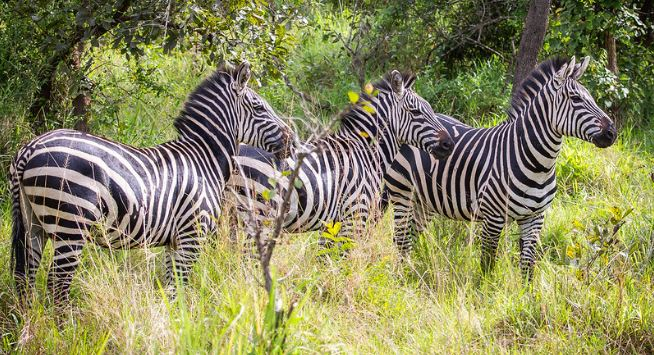 3 days Akagera Wildlife safari