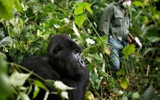 4 Days Le Petit Virunga Package (Mikeno)