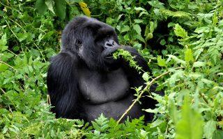 4 Days Rwanda Double Gorilla trekking and Akagera safari