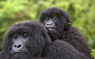 4 Days Rwanda Gorilla trekking and Dian Fossey hike safari