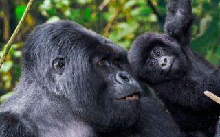 4 Days Uganda Gorilla Trekking & Mount Mgahinga hike