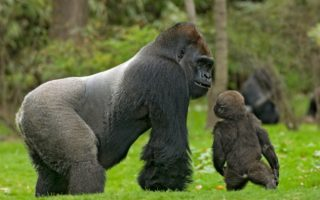 5 Days Eastern Lowland Gorilla Trekking and Mount Nyiragongo hike