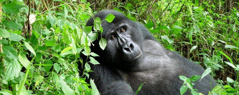 5 Days Ngila Classic Safari (No Mount Nyiragongo)