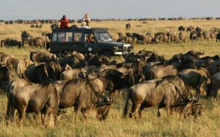7 Days Masai Mara and Serengeti safari