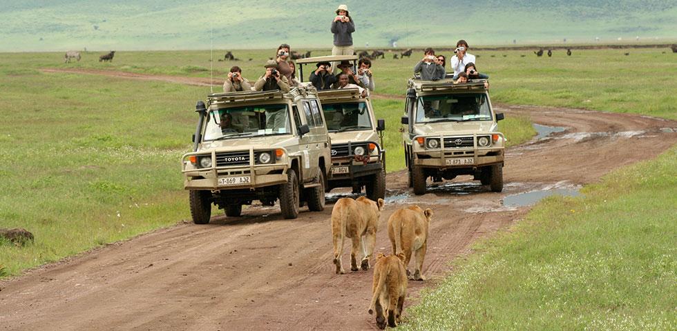 7 Days Masai Mara and Serengeti safari