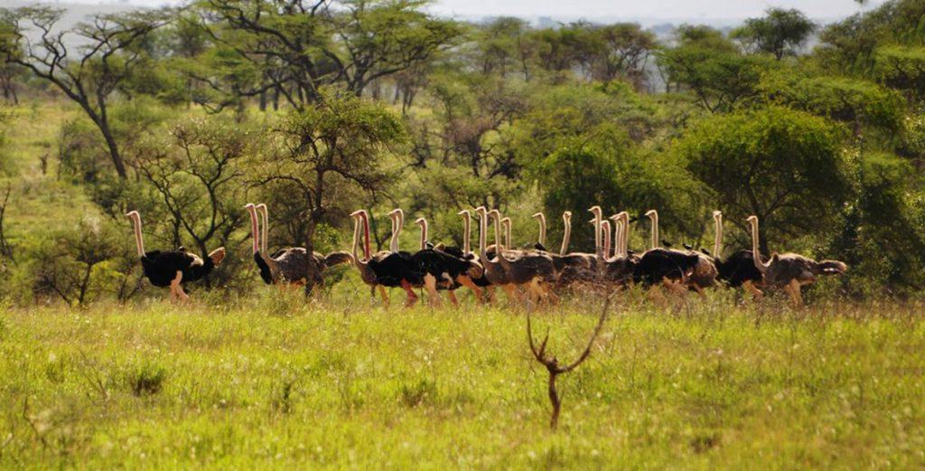 3 Days Flying Kidepo Wildlife Safari