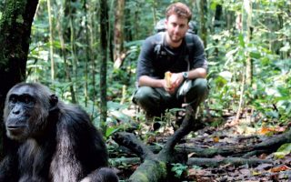 3 Days Uganda Chimpanzee Habituation safari