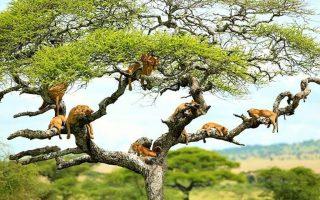 2 Days Lake Manyara Wildlife safari