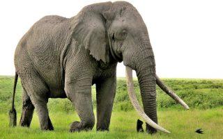 6 Days Best Tanzania Wildlife Safari