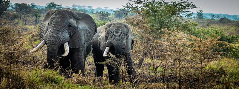 7 Days Best of Uganda Safari Tour