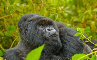 7 Days Rwanda Primate safari
