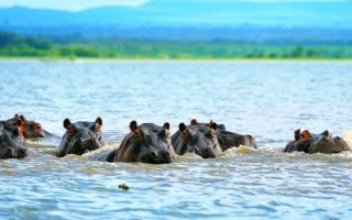 Tourist attractions in Lake Manyara National Park