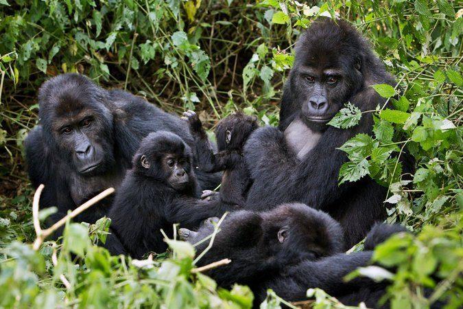 6 days Virunga classic package