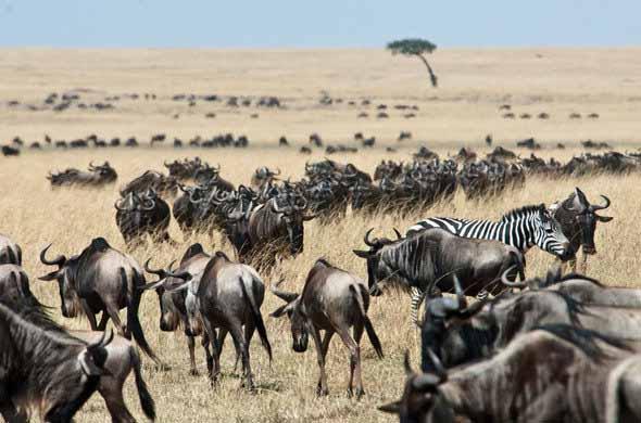 5 days Kenya wildlife safari