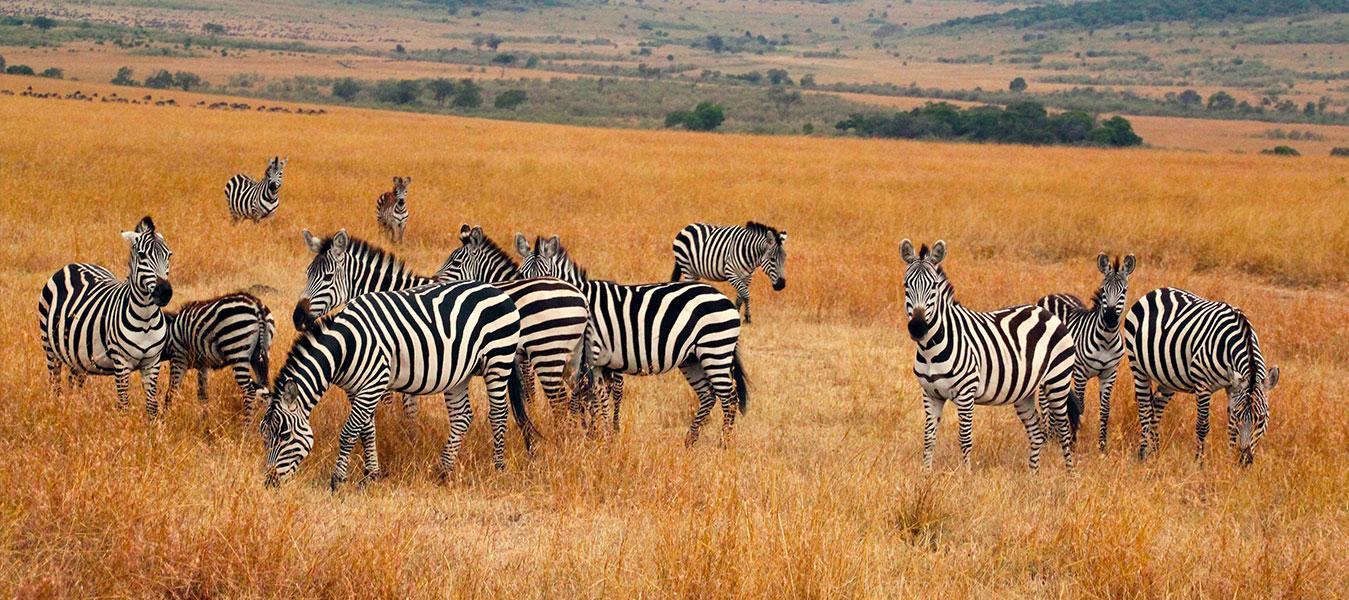 18 Days Uganda Safari Tour