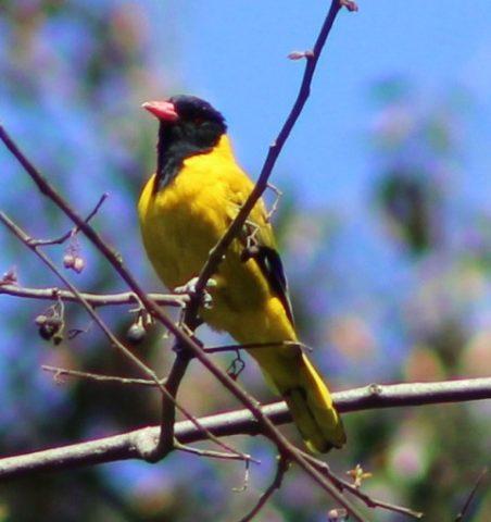 Birds in Bwindi