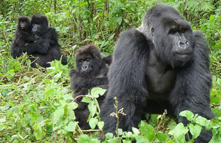 Gorilla Trekking in Queen Elizabeth National Park