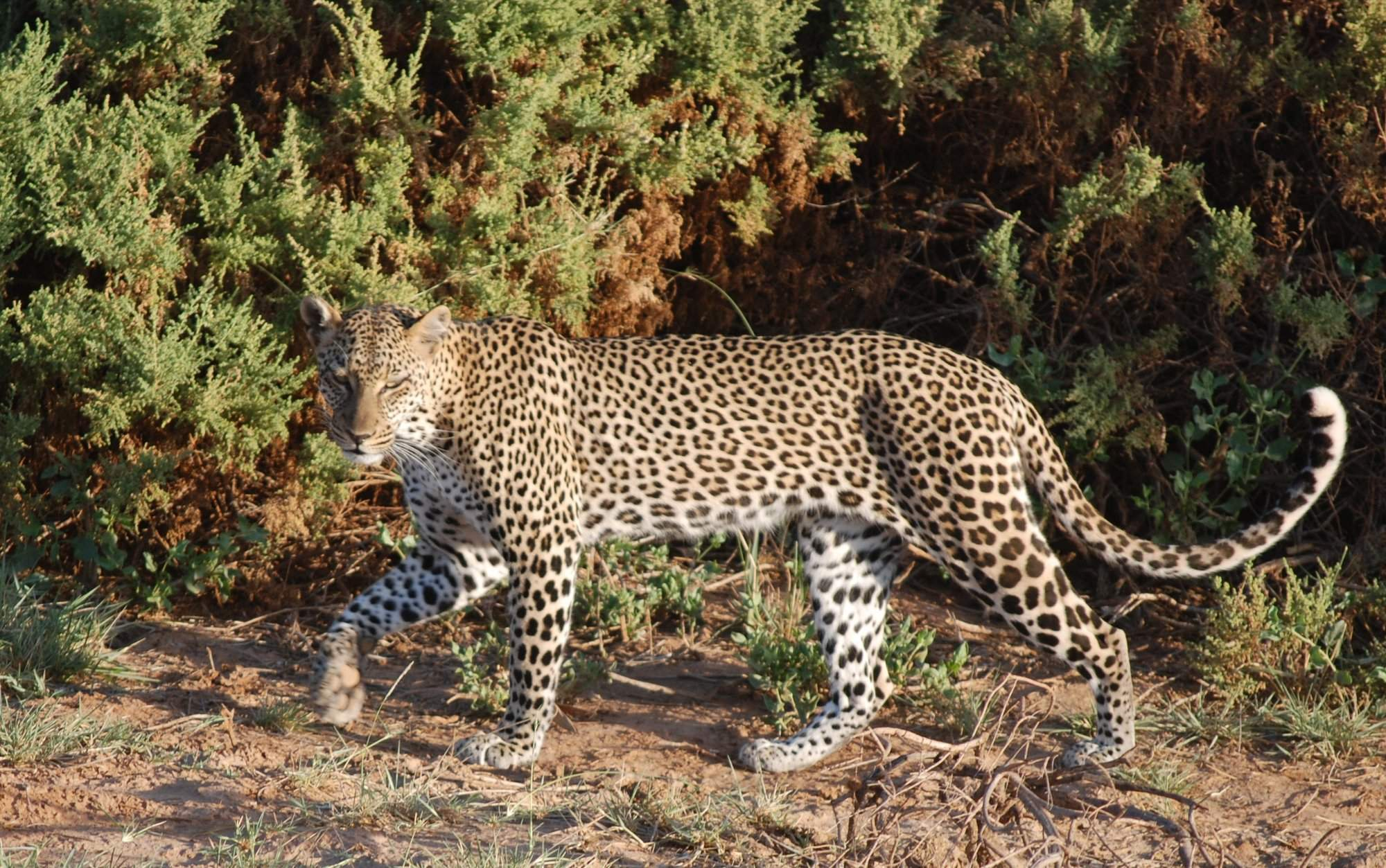 7 Days Best of Kenya Safari
