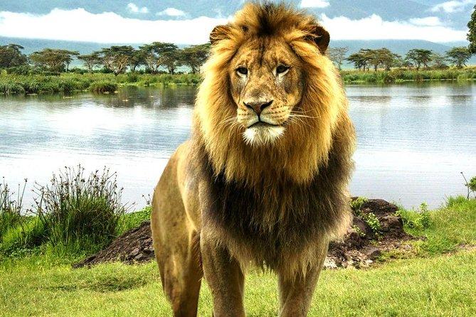 9 days Best Big Five Kenya Private Luxury Safari