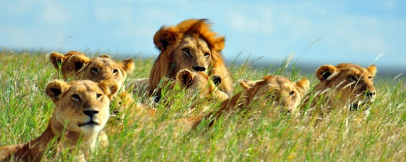 10 days Best of East Africa Safari