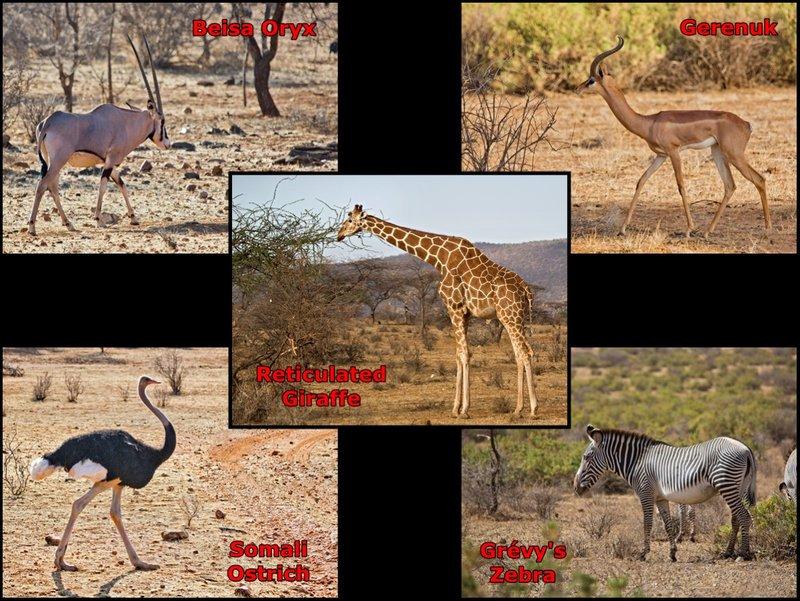 Travel guide to Samburu National Game Reserve